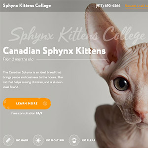 Landing Page for Sphynx Kittens College